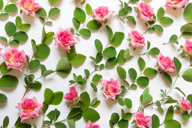 Pattern with plant branches and rose buds