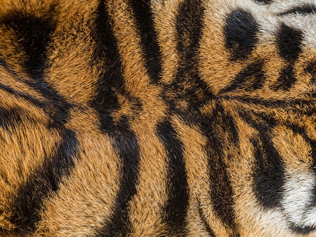 Patterned surfaces of the tiger.