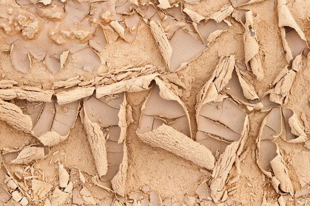 Patterns of dried mud.