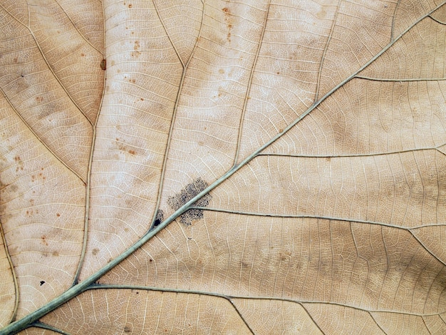 Patterns on the leaves shriveled