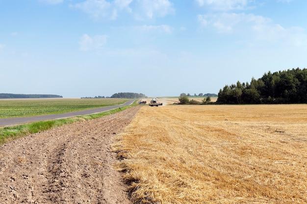 농업 분야를 통과하는 포장 된 시골 길