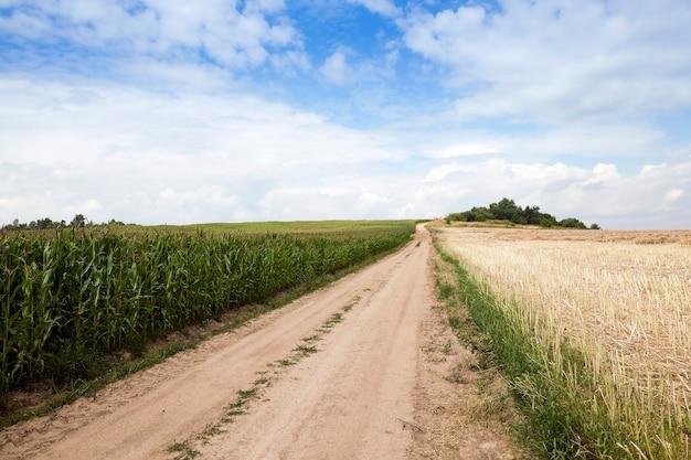 農地を抜ける舗装された田舎道