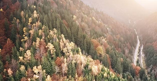 山林を抜ける舗装道路