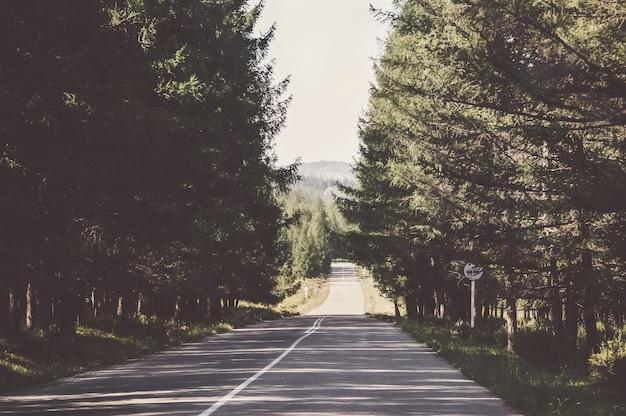 거리로 사라지는 숲의 포장도. 차창에서 본 풍경