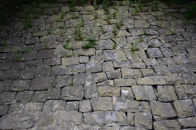 The pavement is lined with cobblestones of various sizes and shapes, through which grass sprouts in the upper part of the frame