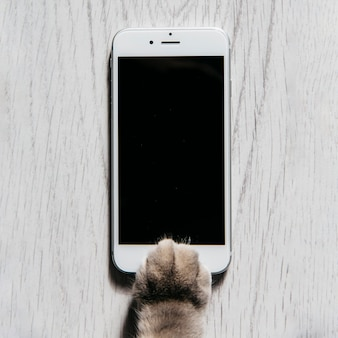 Paw of cat with mobile phone