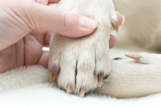 Лапа собаки с когтями на тему ухода за домашними животными.