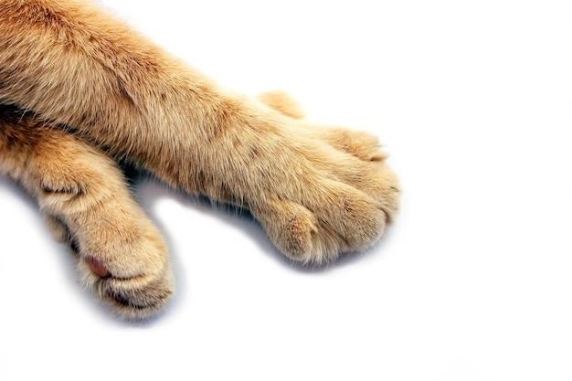 고립 된 빨간 고양이의 발을 닫습니다.