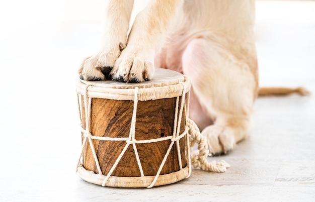 Лапы собаки на барабане