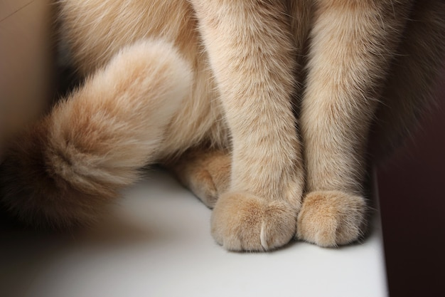 Paws and tail of a red cat that sits on the windowsill close-up.