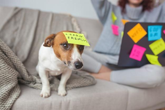 屋内の小さな犬。 pcでかわいい子犬。作業中のラップトップでペット。犬は飼い主を逃しています。コンピューターの近くにいるジャックラッセルテリアだけ。忙しい犬。