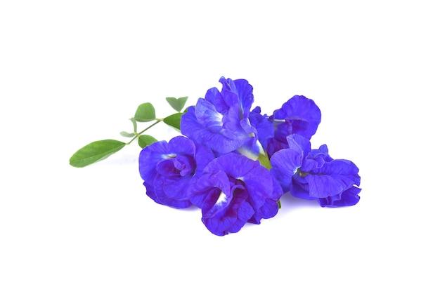 エンドウの花
