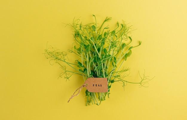 노란색 배경 건강 식품 개념 평면도 평면 누워 완두콩 microgreens