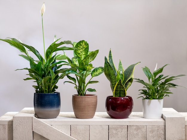 平和リリー、ディーフェンバッキアダム杖、義母の舌バイパーの弦麻麻植物 Premium写真