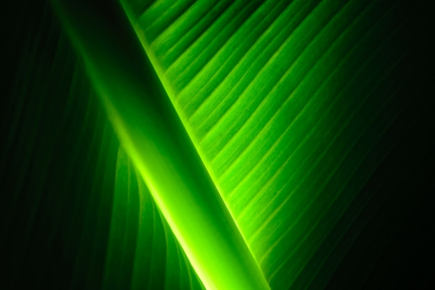 Peace lily leaf with light