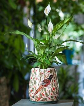 손으로 그린 냄비에 평화 백합 식물