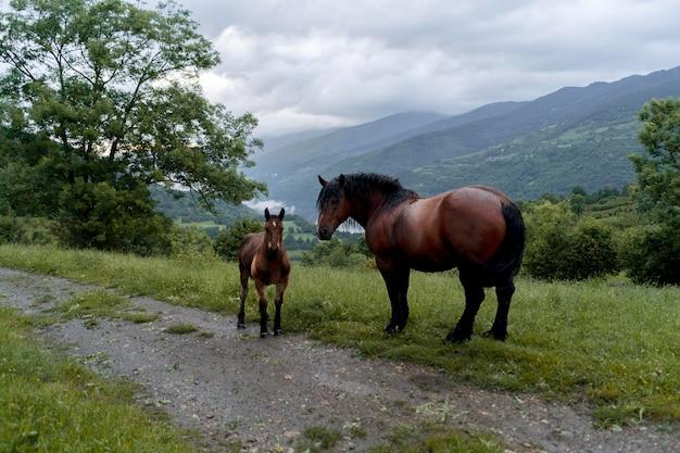 Мирные милые лошади на природе