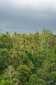 비가 오기 전 푸른 열대 정글 나무와 하늘, 야자수가 있는 열대우림의 평화로운 풍경