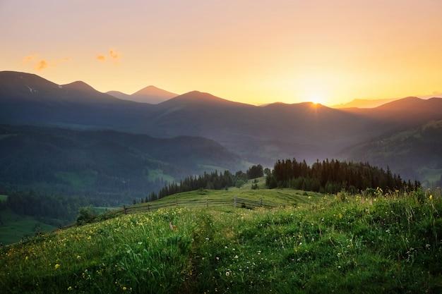 Мирный пейзаж дикой природы во время заката летом