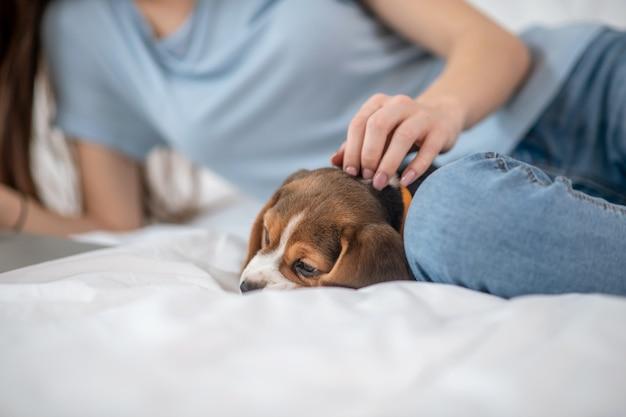 Спокойное настроение. милый щенок лежит рядом со своей хозяйкой, пока она что-то смотрит онлайн