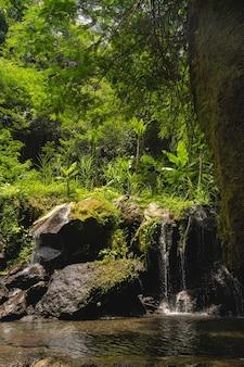 평화로운 자연. 전경에 있는 돌과 깨끗한 강에 떨어지는 물의 열대 전망