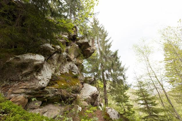 昼間の静かな森