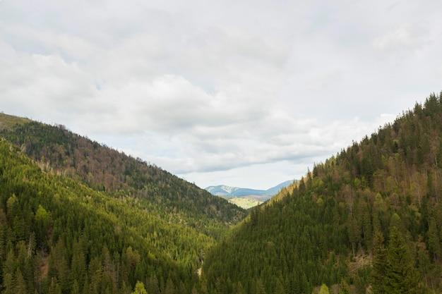 대낮의 평화로운 자연