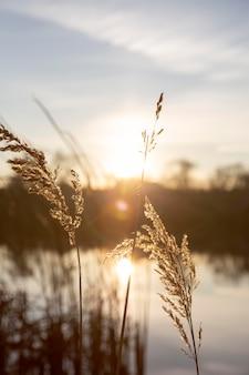 아침 햇살의 평화로운 전망