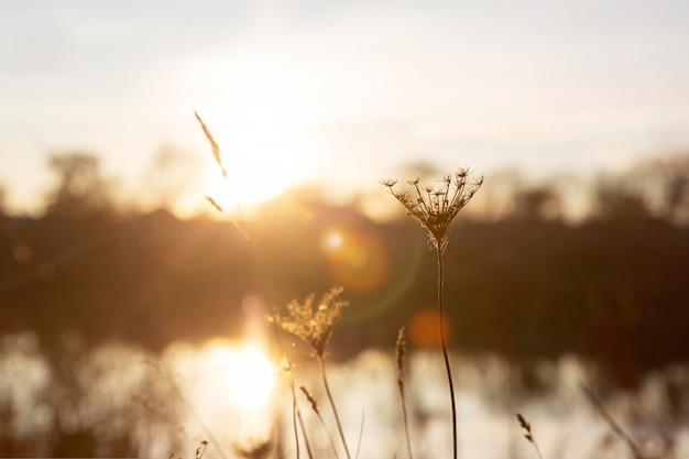 朝の光の穏やかな景色