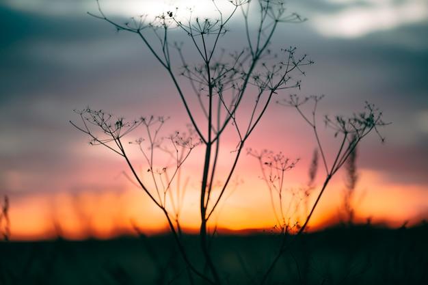 일출 빛의 평화로운보기