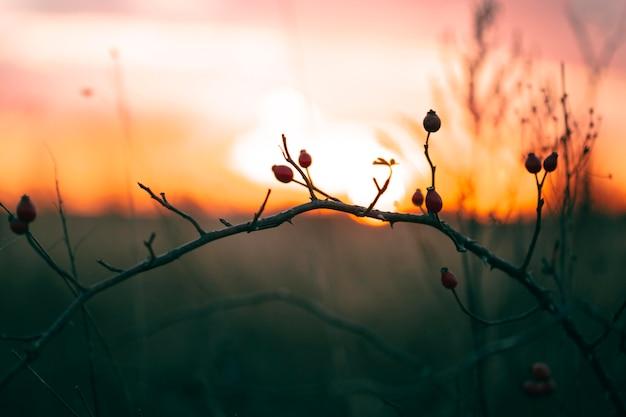 석양 빛의 평화로운 전망