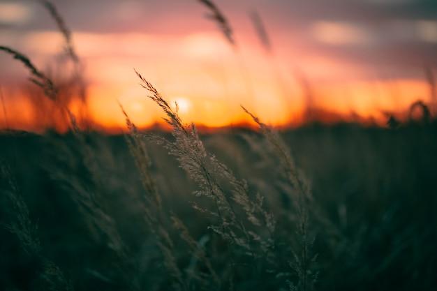 夕日の光の静かな景色