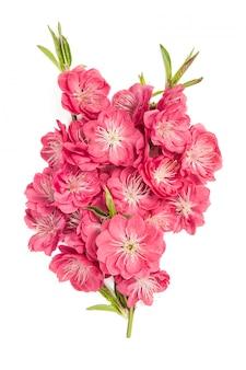 복숭아 꽃 부케 화이트 핑크 봄 꽃