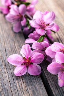 Peach blossom on old wooden table. fruit flowers.