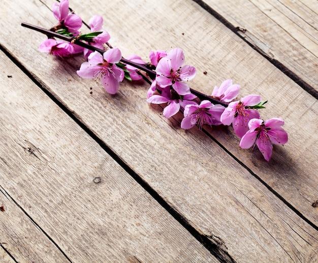 오래 된 나무 배경에 복숭아 꽃입니다. 과일 꽃. 과