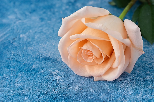 Peach color  rose on a blue and white acrylic paint background