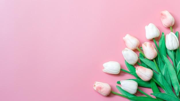 ピンクの壁に桃色のチューリップ、テキストのコピースペース