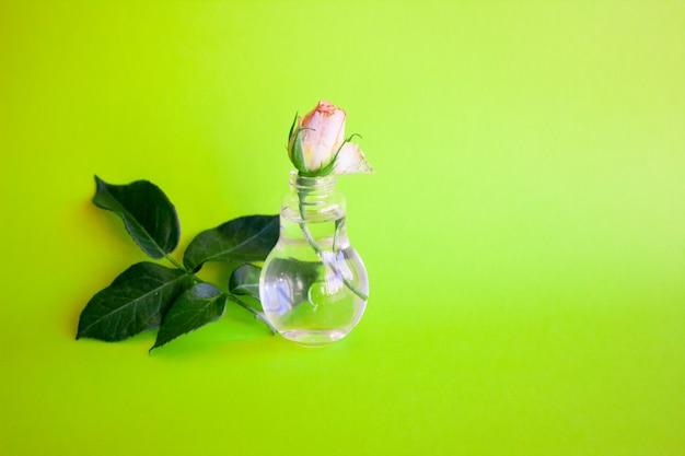 桃の花瓶にガラスの花瓶