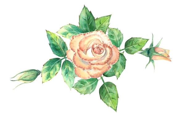 Персиковые розы, зеленые листья, открытые и закрытые цветы. букет цветов для поздравительных открыток или приглашений. акварельная иллюстрация.