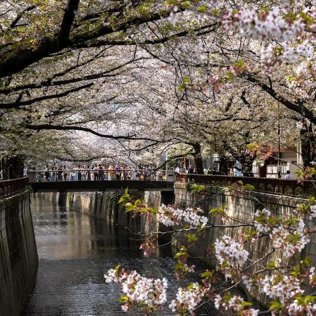 일본의 복숭아 나무 꽃