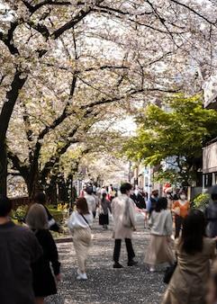日本の桃の木の花