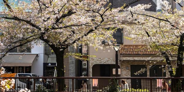 Цветение персикового дерева в японии