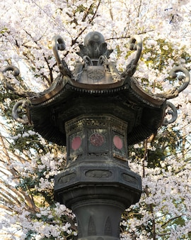Цветение персикового дерева в токио при дневном свете