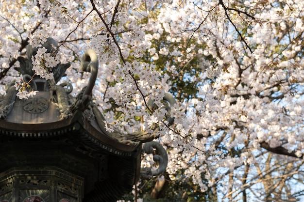 대낮에 도쿄의 복숭아 나무 꽃
