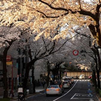 東京の桃の木の花