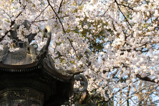 Peach tree blossom in tokyo in daylight