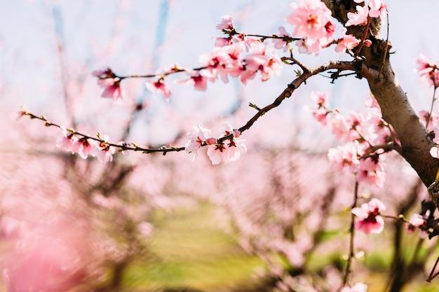 桃の木が咲いて