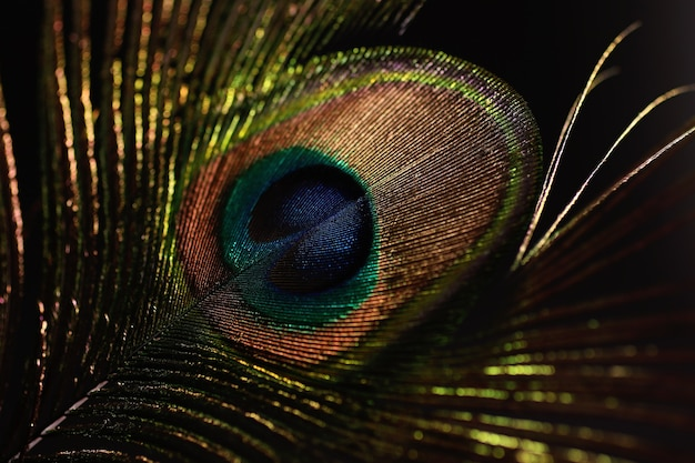 Peacock feather isolated on black.overlay layer.
