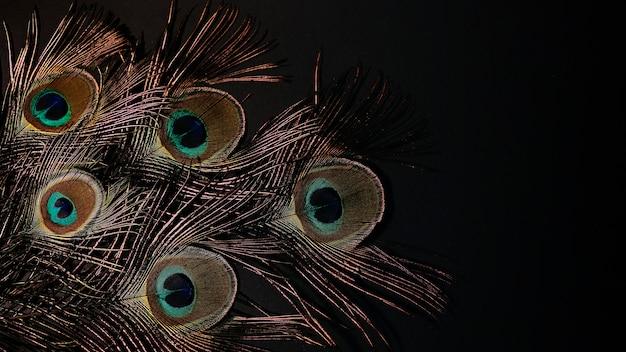 黒の背景に孔雀の羽。コピースペース、大きなバナーと自然な背景。