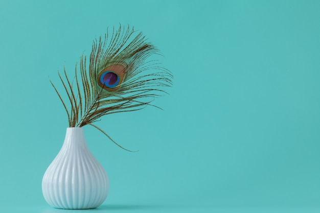 Peacock feathers on plain background